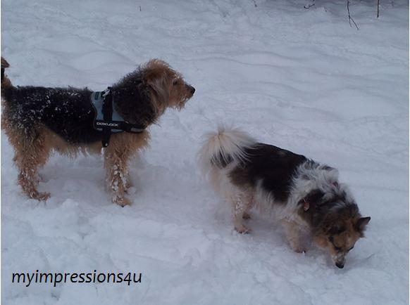 Hunde im Schnee 1