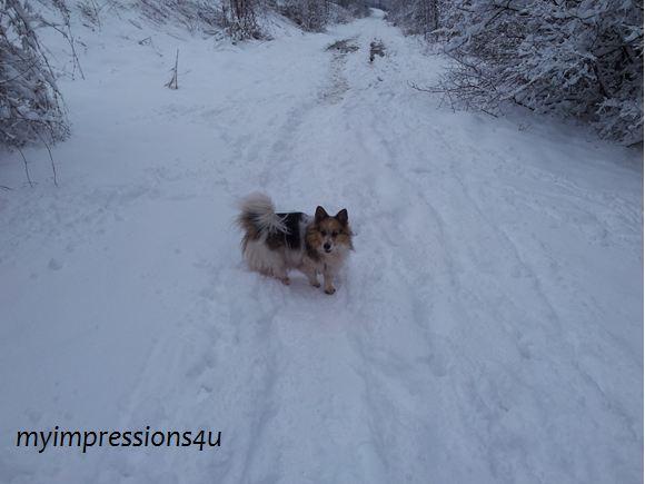 Hunde im Schnee 2