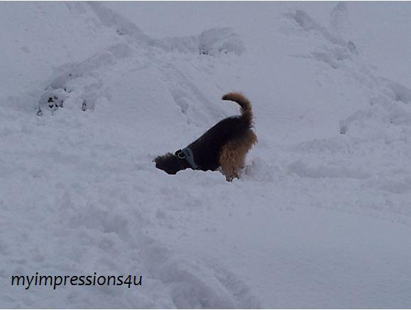 Hunde im Schnee 3