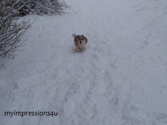 Hunde im Schnee 4