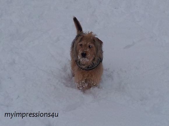 Hunde im Schnee 5