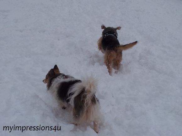 Hunde im Schnee 6