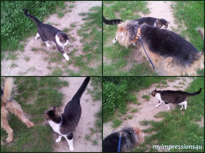 Katzi & Amigo