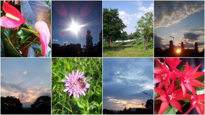 Instagram_Landscape + Flowers