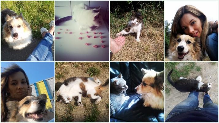 Instagram_Tiere