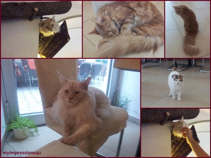 Katzen bei Cafe Neko
