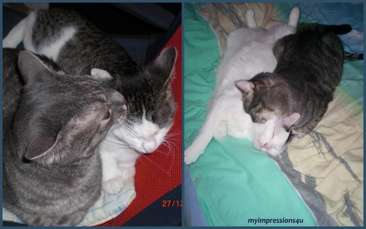 Bruno, Nicki, Pepi