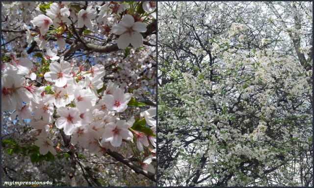 Frühling 2014 - März