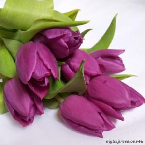 Tulpen für Zuhause - April 2014