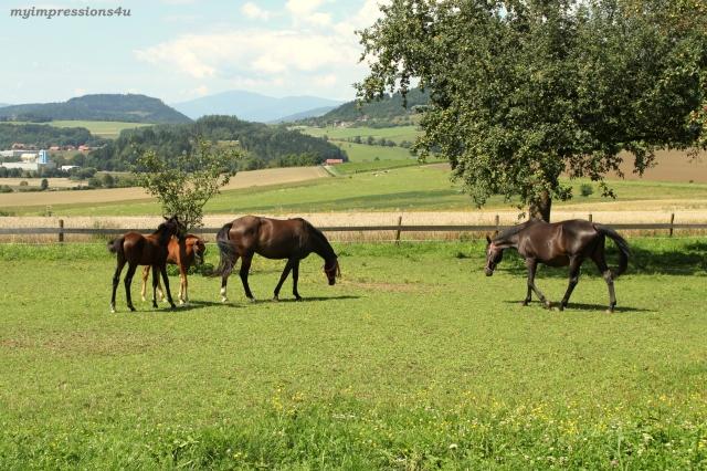 Pferde in Kärnten