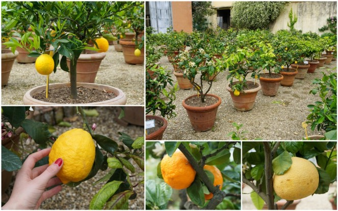 Giardino di Boboli 6_Florenz_miyimpressions4u